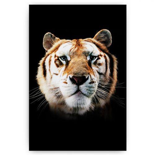 poster tijger op zwart