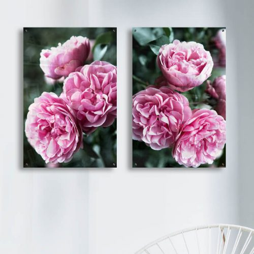 poster roze rozen