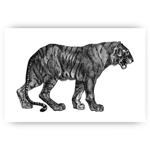 poster tijger illustratie