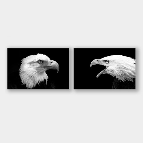 poster arend eagle