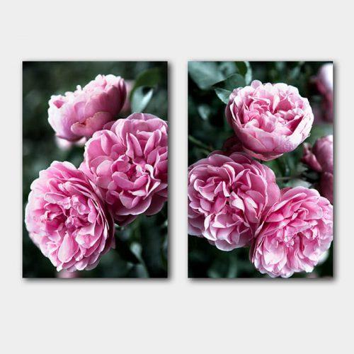 poster set roze bloemen struik