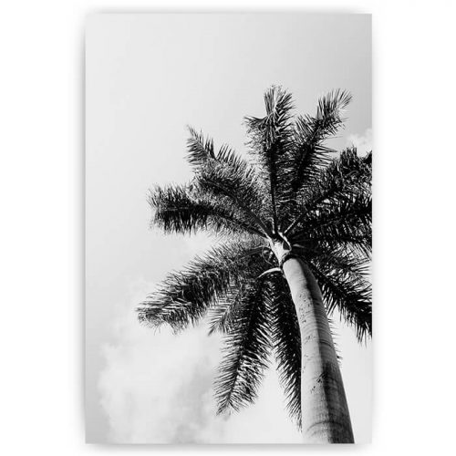 poster palmboom zwart wit