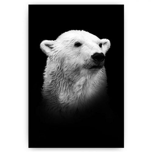 poster portret ijsbeer