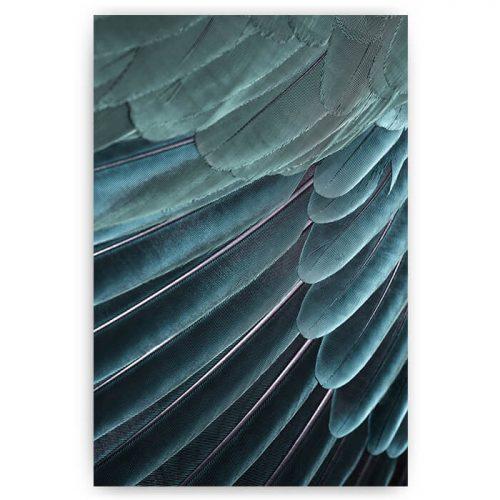poster veren vogel blauw