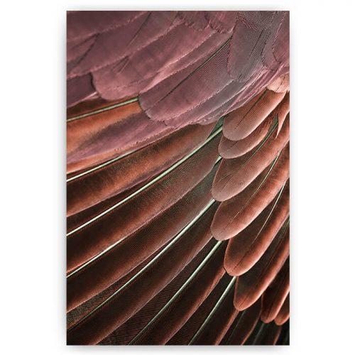 poster veren vogel rood paars