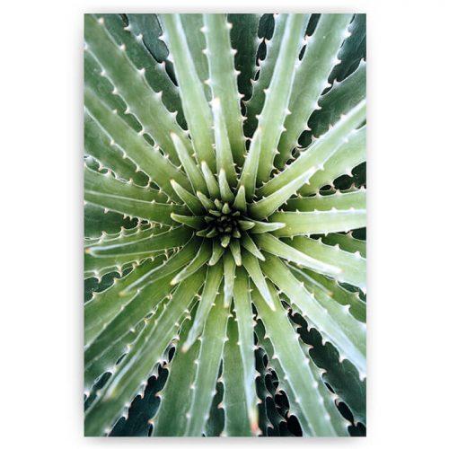 poster stekel plant groen