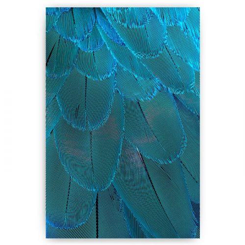 poster blauwe veren