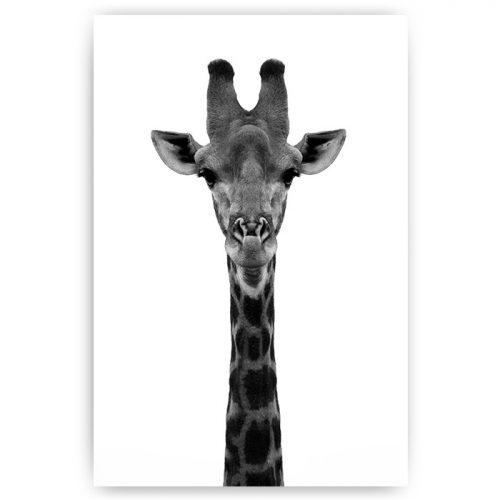poster giraf portret