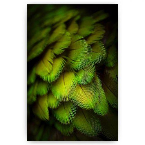 poster groene veren vogel