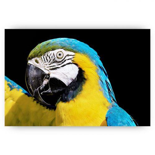 poster papegaai