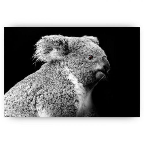 poster koala beer