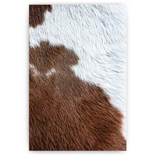 poster koeien dierenprint