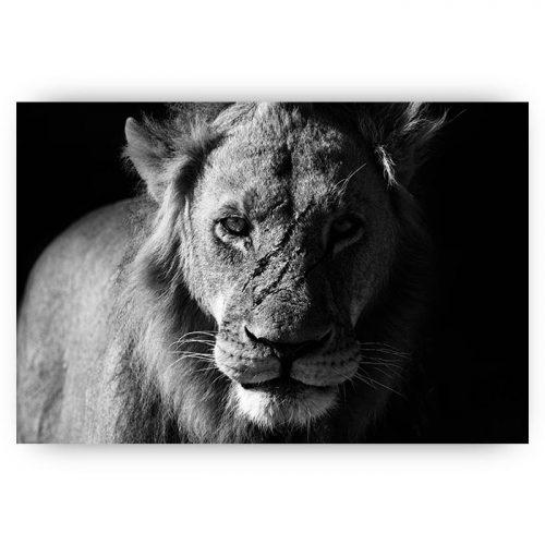 poster leeuw