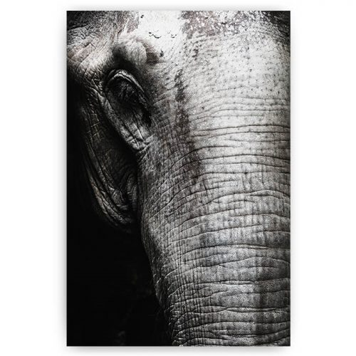 poster olifant close-up