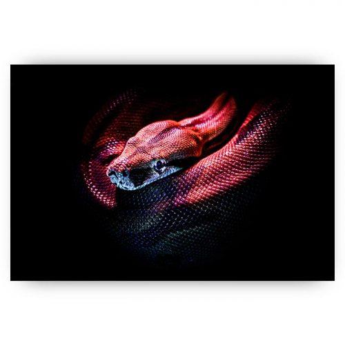 poster paarse slang