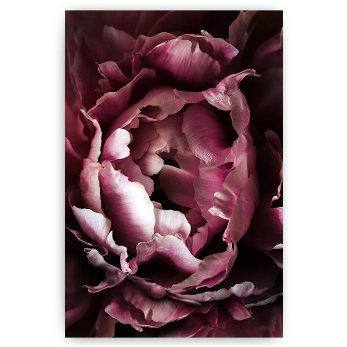 poster roze bloem blaadjes