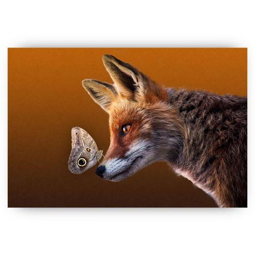 poster vos met vlinder