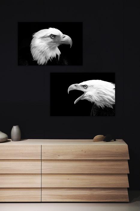 poster set arend adelaar zwart wit