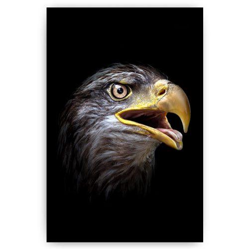 schilderij arend adelaar vogel