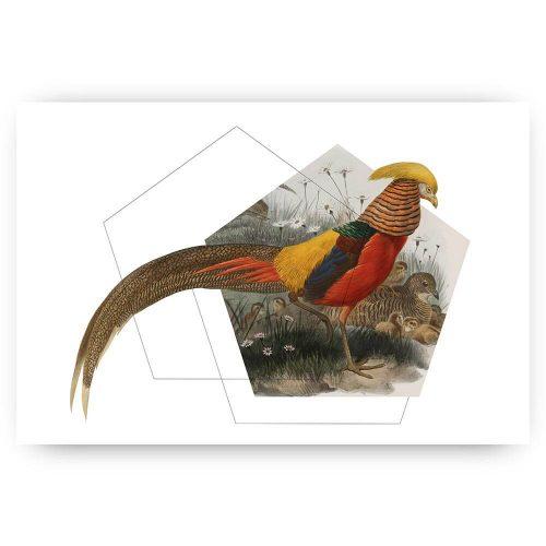 print fazant vogel