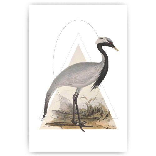 poster illustratie kraanvogel