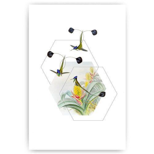 poster illustratie paradijsvogels