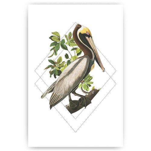 poster pelikaan vogel illustratie
