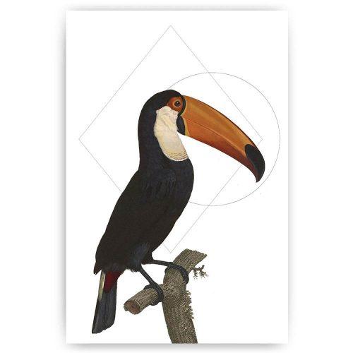 poster print toekan vogel