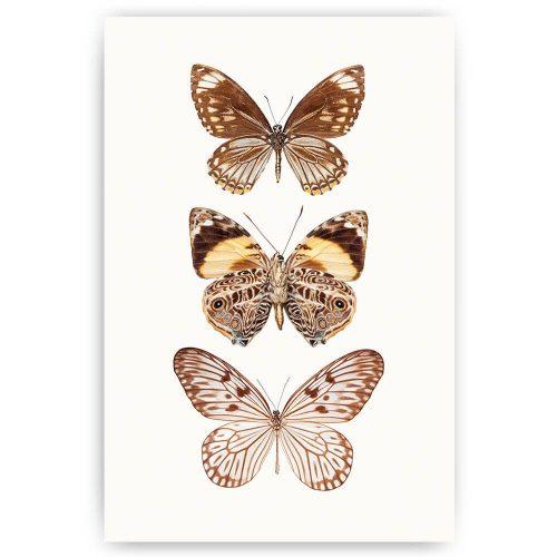 poster vlinders