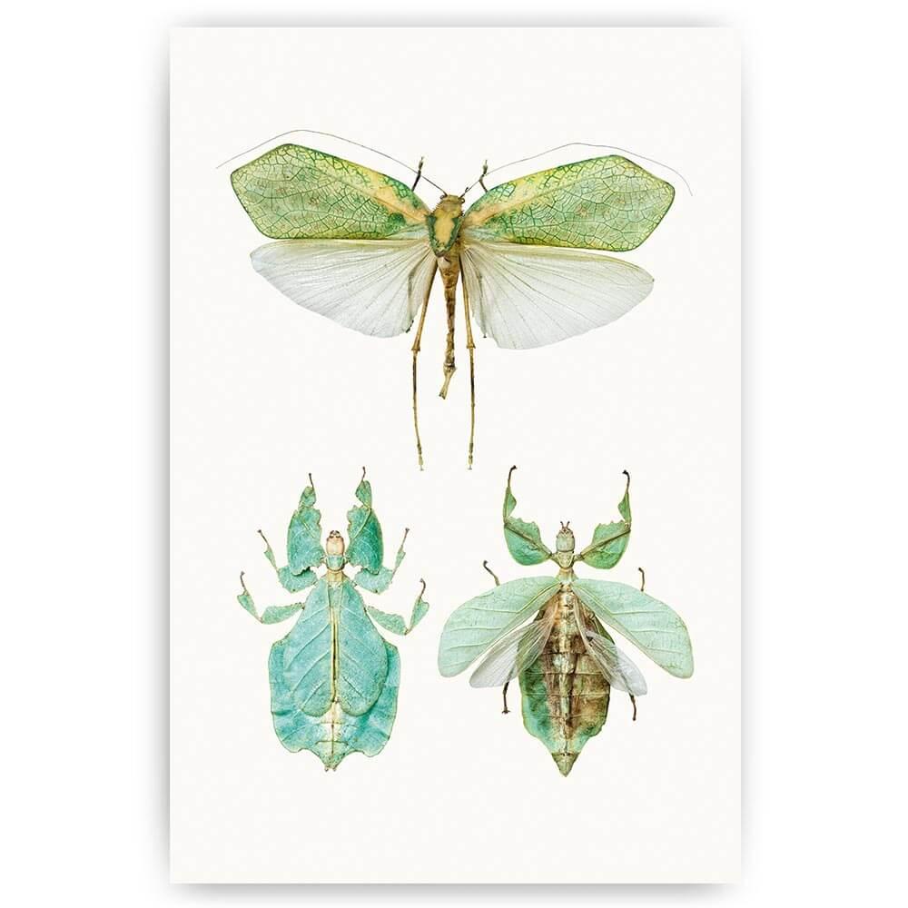 poster groene insecten