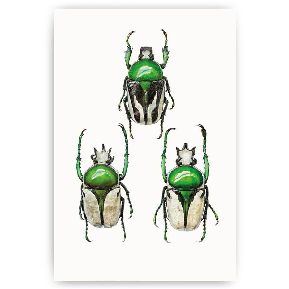 poster groene kevers