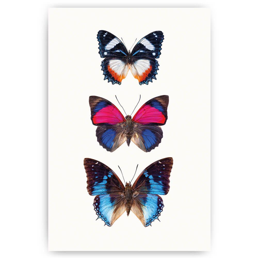 poster print vlinders