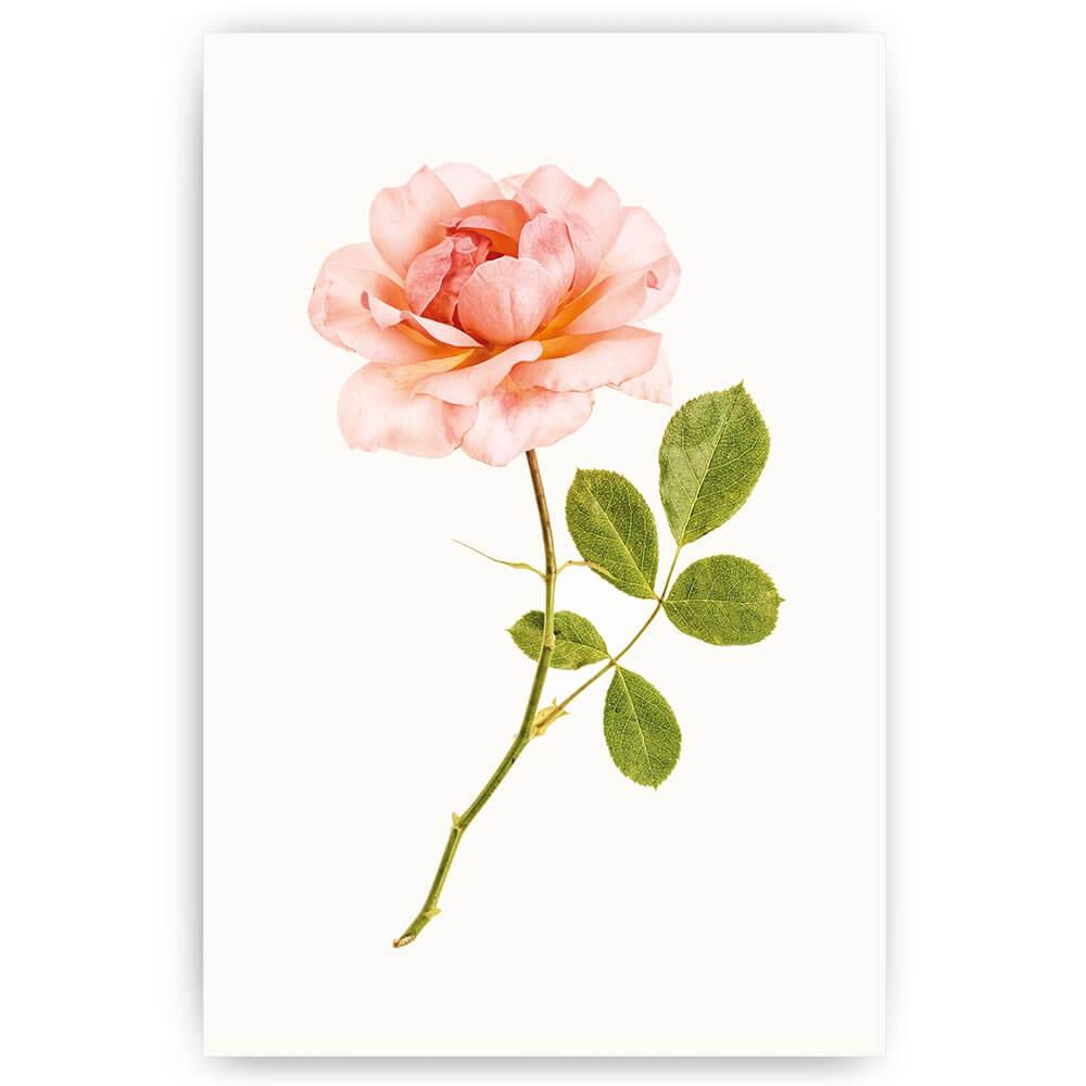 poster roos bloem