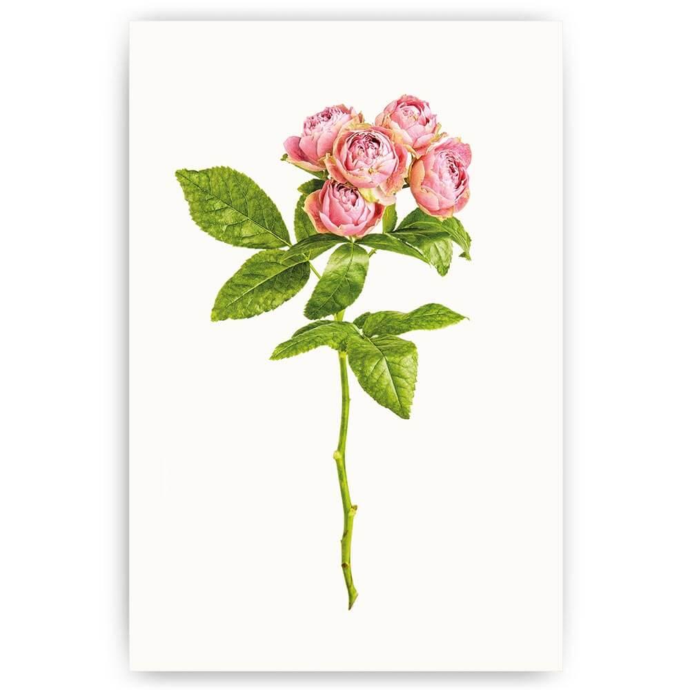 poster rozen