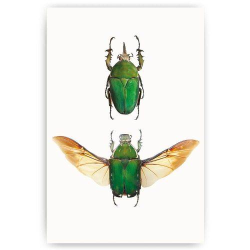 poster gevleugelde insecten