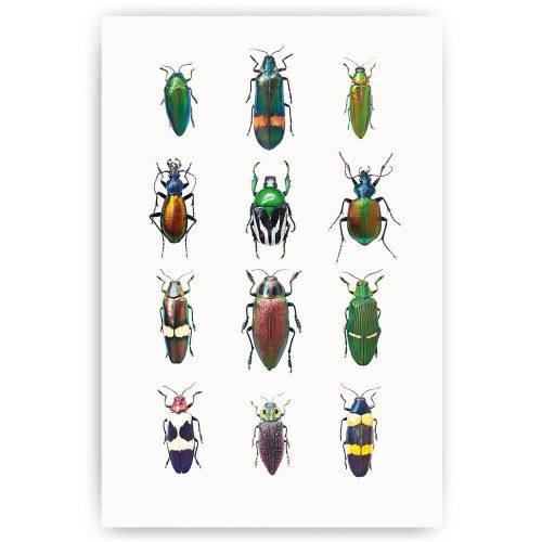 poster insecten