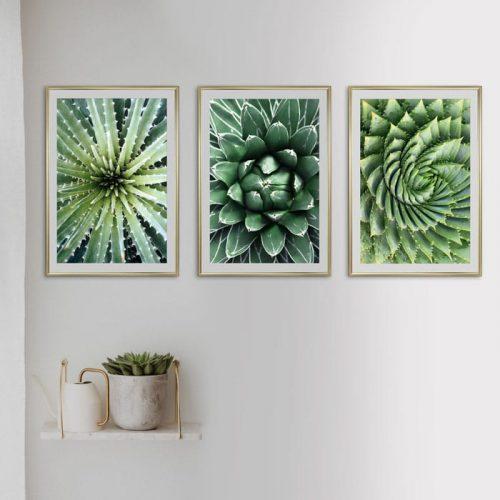 poster set groene vetplanten