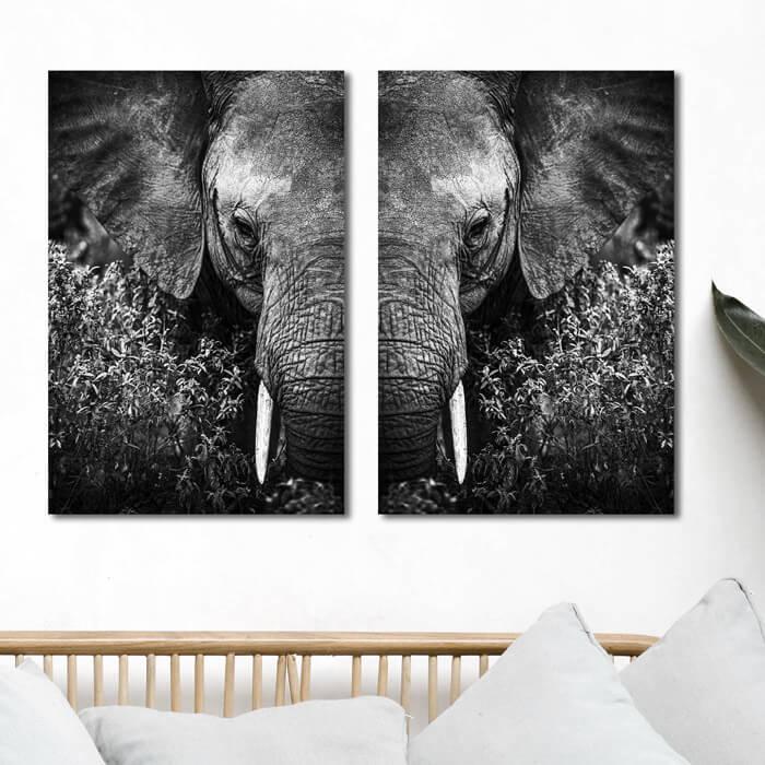 poster set olifant kop