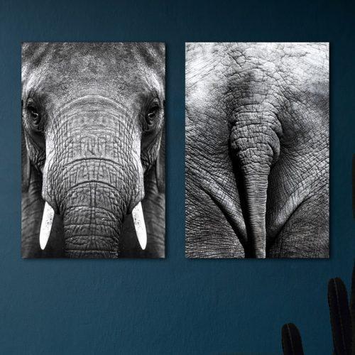 poster set olifant kop staart