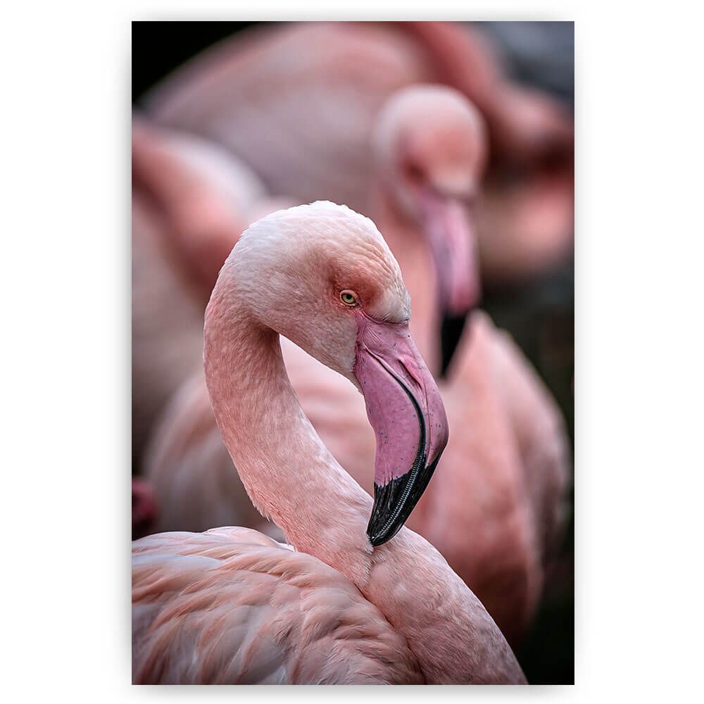 poster schilderij flamingo