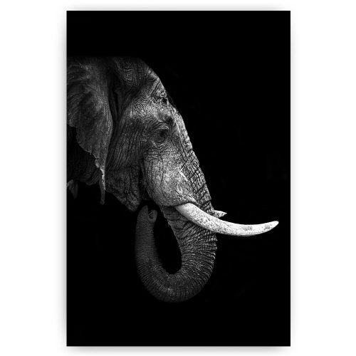 poster olifant kop zijkant