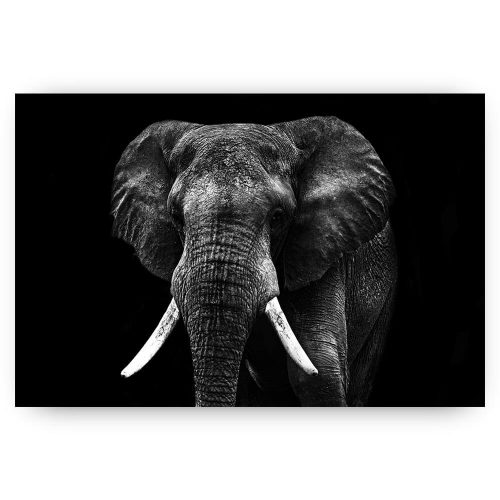 poster zwart wit olifant