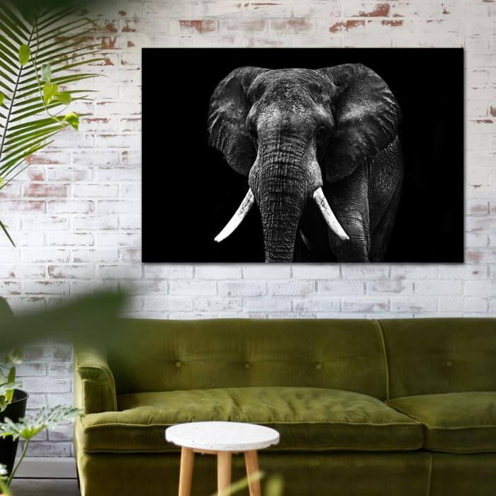 poster olifant zwart wit