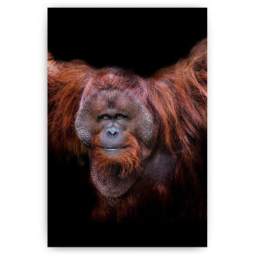poster schilderij orang oetan aap