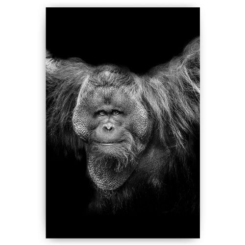 poster schilderij orang-oetan