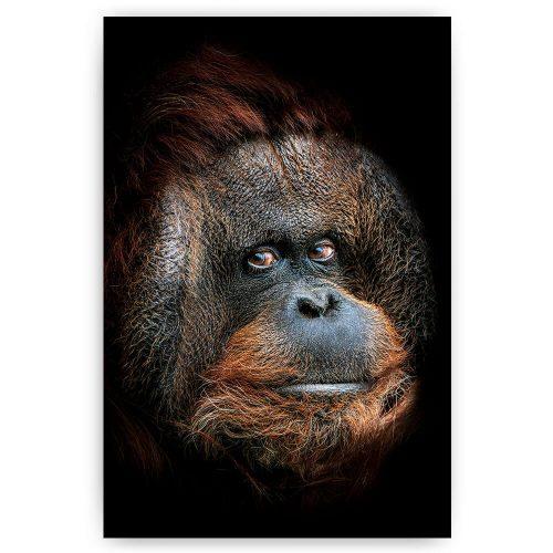 portret aap orang oetan