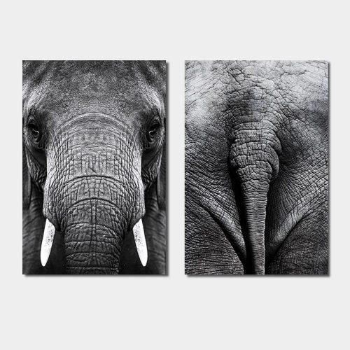 tweeluik olifant kop staart