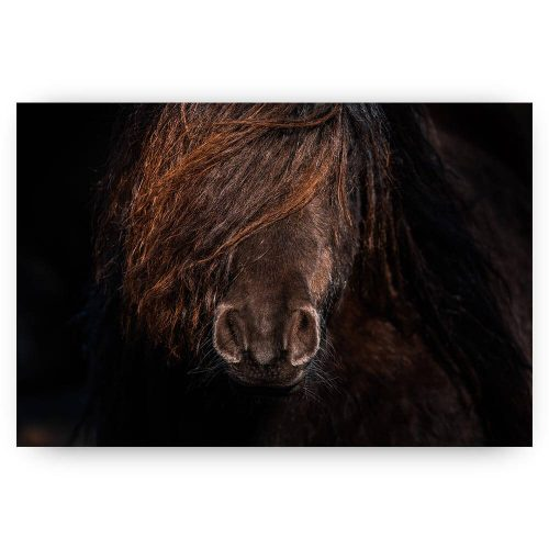 bruin pony paard