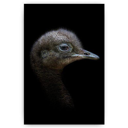 emu vogel op zwart