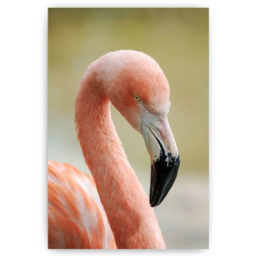 poster flamingo vogel